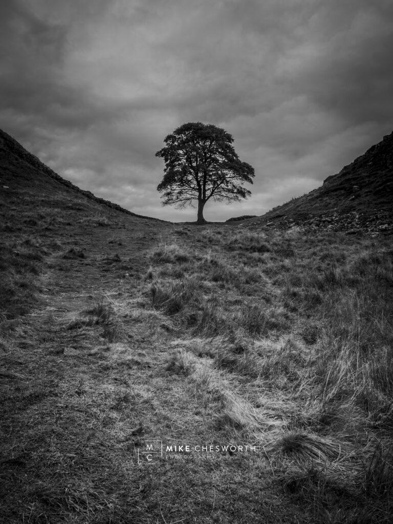 The Tree at Sycamore Gap