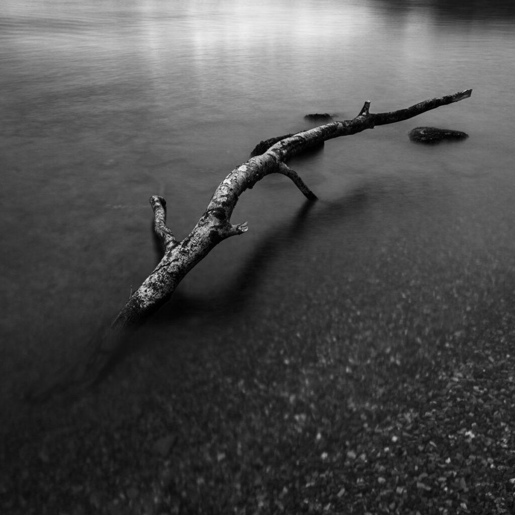 A fallen branch on Lake Windermere.